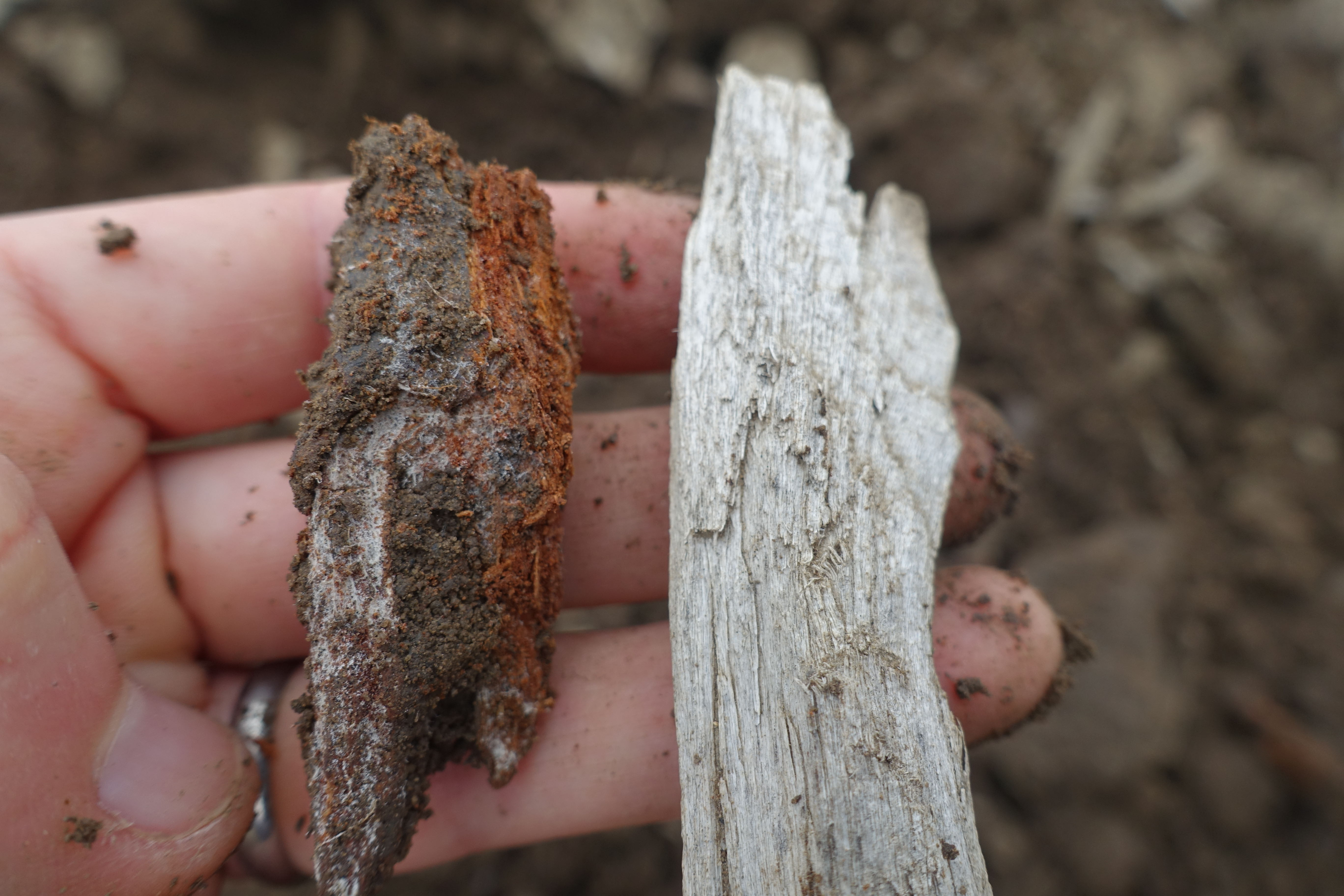 decomposing wood chip