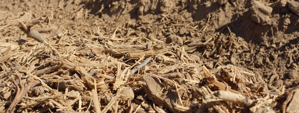 Wood chips spread on ground surface